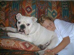 Clarence the English Bulldog laying on a couch on a pillow and a girl is asleep on Clarences back