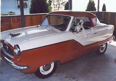 A white with black Bulldog is sitting in the driver seat of a 1950s Nash Metropolitan car that is parked in a car port.