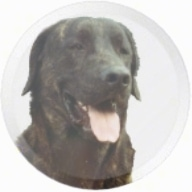 The Head of a Cão de Castro Laboreiro is photoshoped into a circle. It has its mouth open and tongue out.