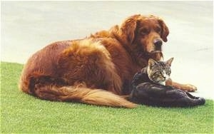 Jake the red colored retriever dog and Socks the gray and white tiger cat are laying in the grass next to each other on the curb of the street