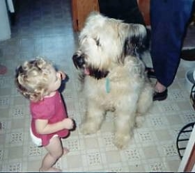 A toddler in a pink shirt is standing on a tiled floor and it is looking at a tan with black Briard dog sitting in front of it. Its mouth is open and tongue is out. The shaggy dog is larger than teh baby.
