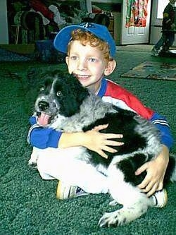 A boy wearing a blue baseball cap is sitting on a dark green carpet and he has a black and white spaniel looking dog in his lap. The boy is looking to the left and the dog is looking forward with its mouth open and tongue out.