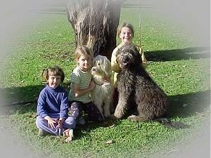 Three kids and two dogs in grass in front of a tree - A girl in a blue shirt is sitting next to a girl with blonde hair. The blonde haired girl has her arm around a tan Australian Labradoodle and next to her is a girl sitting behind a brown Australian Labradoodle.