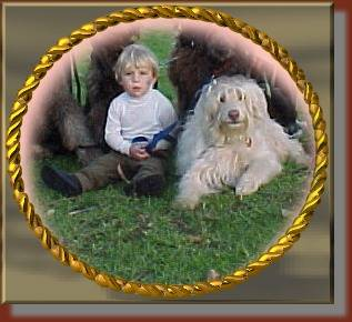 Close up - A boy in a white shirt is sitting in grass with Australian Labradoodle sitting and laying next to and behind him.