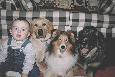 A toddler sized child is sitting next to three dogs laying in front of a couch. They are all looking forward and they have the same focused expression on there face.