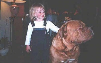 A blonde haired girl in blue jean suspenders and a white shirt is standing next to a brown with white Dogue de Bordeaux dog that is sitting and looking to the right. The dog is larger than the child.