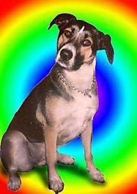 Lulu the Dog with its head tilted to the right and a photoshopped rainbow background