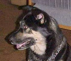 Mixed Breed Dog Pictures with Bios, 9