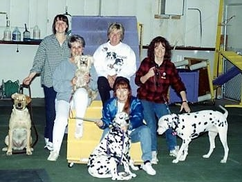 A picture of 4 dogs with there owners