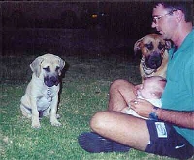 Maximillion the Boerboel as a puppy sitting in front of its owner who has a baby in his lap with an adult Boerboel next to him