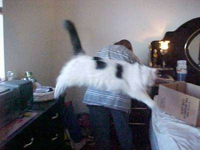 A Cat is jumping from a dresser to a bed. There is a person with there back to the camera fiddling with a drawer