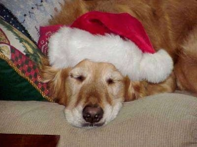 A Golden Retriever is sleeping on a tan couch wearing a santa hat.