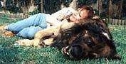 A Leonberger is laying on its right side in grass and there is a lady using the side of the dog as a pillow.