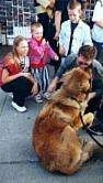 The back of a Leonberger is sitting in grass and it is licking the face of a man in front of it. There is a crowd of people behind it.