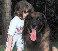 A Leonberger is sitting in grass and next to it is a child kissing the side of its head. The Leonbergers mouth is open and long tongue is out.