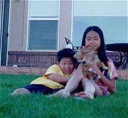 A sister and a brother are laying in a yard in front of a house. The sister has a Pomeranian Puppy in her lap.
