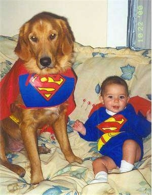 A dog is sitting next to a baby on a tan floral couch. They baby is dressed as Superman and the dog is dressed as Krypto the Superdog.