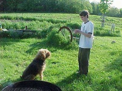 The right side of a black with tan Airedale Terrier that is sitting on grass with a boy in front of it