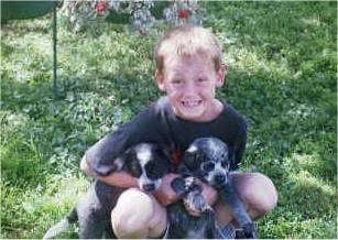 A boy sitting in a lawn is holding Two Australian Heeler puppies