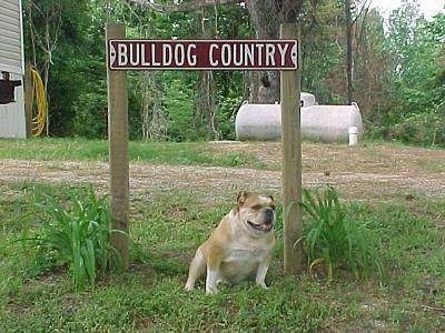 Kaddy the English Bulldog sitting under a sign that reads 'BULLDOG COUNTRY' with a house and a propane tank in the background