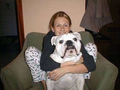 Clarence the white English Bulldog sitting on a green chair with a lady hugging him from behind