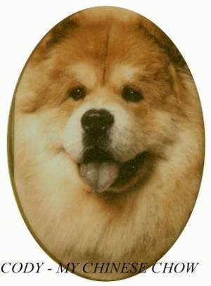 Close Up - Cody the Chow Chow Puppy has its mouth open and tongue out. The Image has a white border that frames Codys face in an oval. The words 'Cody - My Chinese Chow' are overlayed