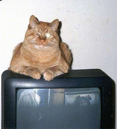 Caraticus a One-eyed Cat is laying on top of a CRT television