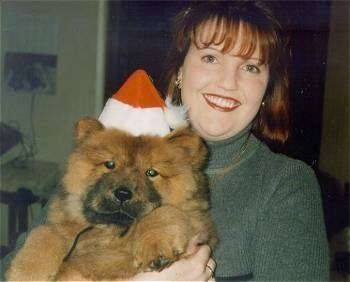 Caboose the Chow Chow puppy looks like a teddy bear as he is being held in the air by his owner. Caboose has a Santa hat on and his owner is smiling