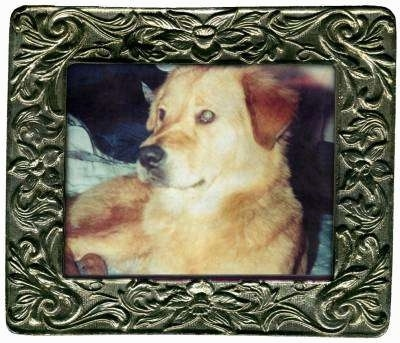 Framed picture of Lillith the Dog
