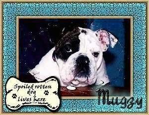 A photo of Mugzy the Bulldog with a photoshopped frame over top and the words 'Spoiled Rotten dog lives here' on a drawn dog bone. Also the words 'Mugzy' are overlayed in the other corner