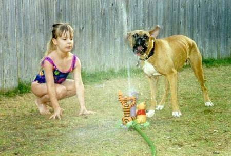 A girl in a bathing suit is squatting down in the grass looking at a Winnie the Pooh water sprinkler. There is a tan with white Boxer biting at the water that is squirting out.