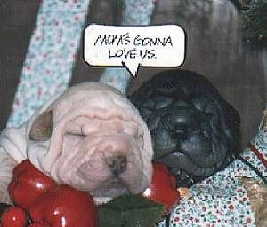 Close up - Two wrinkly Chinese Shar-Pei puppies are sleeping in a basket of vegetables. There is a word bubble with the words - Mom's Gonna Love Us. - in it.