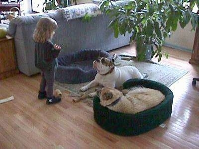 A tan with white dog is laying in a green dog bed and Spike the Bulldog is laying on the rug. They both are looking up at a little blonde-haired girl standing in front of them.