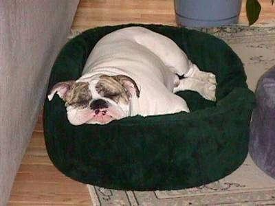 Aluminium Framed Dog Beds