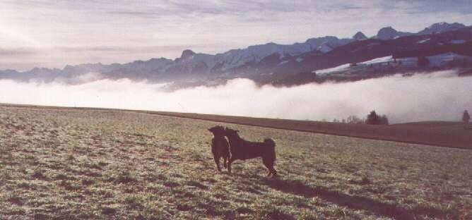 Two dogs are playing with each other on the side of a mountain. There is a large amount of fog behind them and a scenic view of mountains.