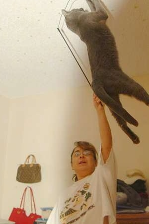 Newbie the cat jumping high in the air to grab a wand toy being aimed towards the ceiling by its owner