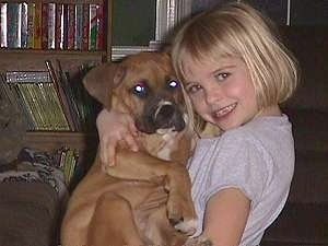 Allie the Boxer puppy in the arms of Amie
