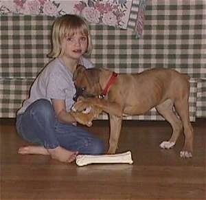 Amie playing with Allie the Boxer Puppy behind a couch