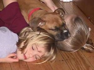 Close Up - Allie the Boxer, Amie and Brittany laying on the floor with their heads all in a pile, Allie is on top