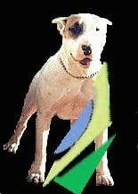 A Dogue Brasileiro is standing, the background is cutout and replaced with a black layer. There is a Blue, Yellow and Green Logo overlayed on this image