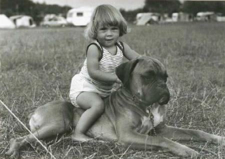 A fawn Boxer dog is laying in a field with little child sitting on its back. There are campers and tents in the distance.