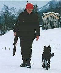 Ulv the Belgium Shepherd puppy running through the snow with its owner on a hunt