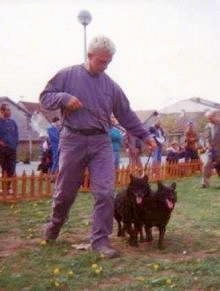 A man is in a show ring leading two Croatian Sheepdogs
