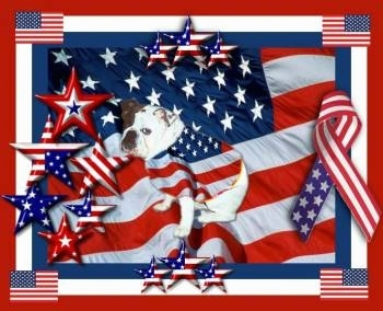 Mugzy the English Bulldog is on a photoshopped background. that is of the American Flag Mugzy is photoshopped wearing an american flag shirt.