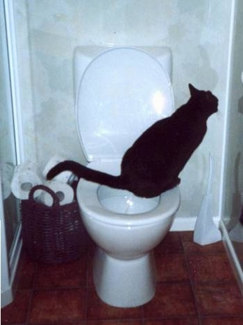 Olly the cat peeing a toilet with a brown wicker basket of toilet paper on the floor behind him