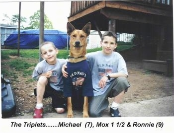 Two boys are kneeling next to a Pharaoh Hound in an Old Navy shirt. They are outside. The words - The Triplets.......Michael (7), Mox 1 1/2 & Ronnie(9) - are overlayed in the bottom middle.
