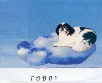 Toby the dog photoshopped on a cloud. With the words - TOBBY - overlayed
