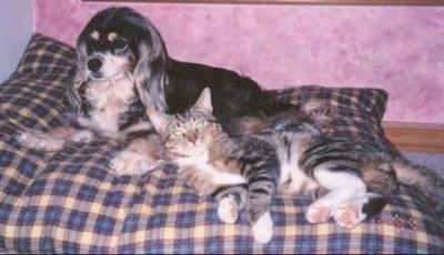 A black and tan dog is laying on a plaid dog pillow next to a grey and tan tiger cat