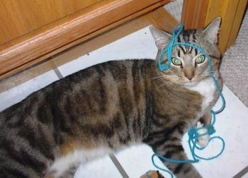 A grey and tan tiger cat is laying on a tiled floor under a table with blue yarn all over its head