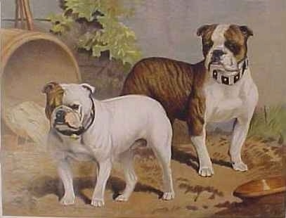A colored picture of two Bulldogs that are standing next to sewer drain.
